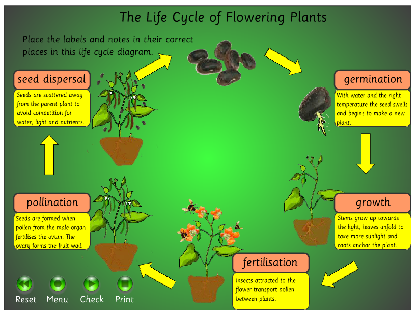 Key Stage 2 Life Processes and Living Things