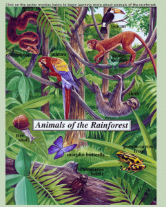 Learning about Tropical Rainforests