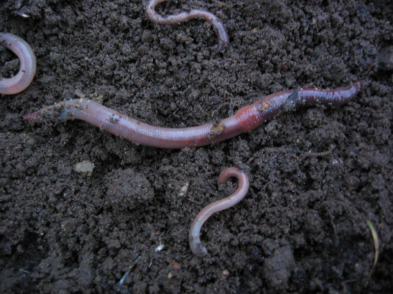 Earthworms Centipedes and Millipedes