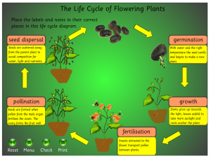 Key Stage 2 Life Cycles