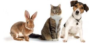 1-header-animals-image