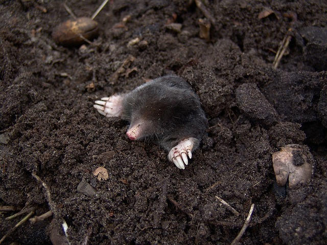 Learning about Moles