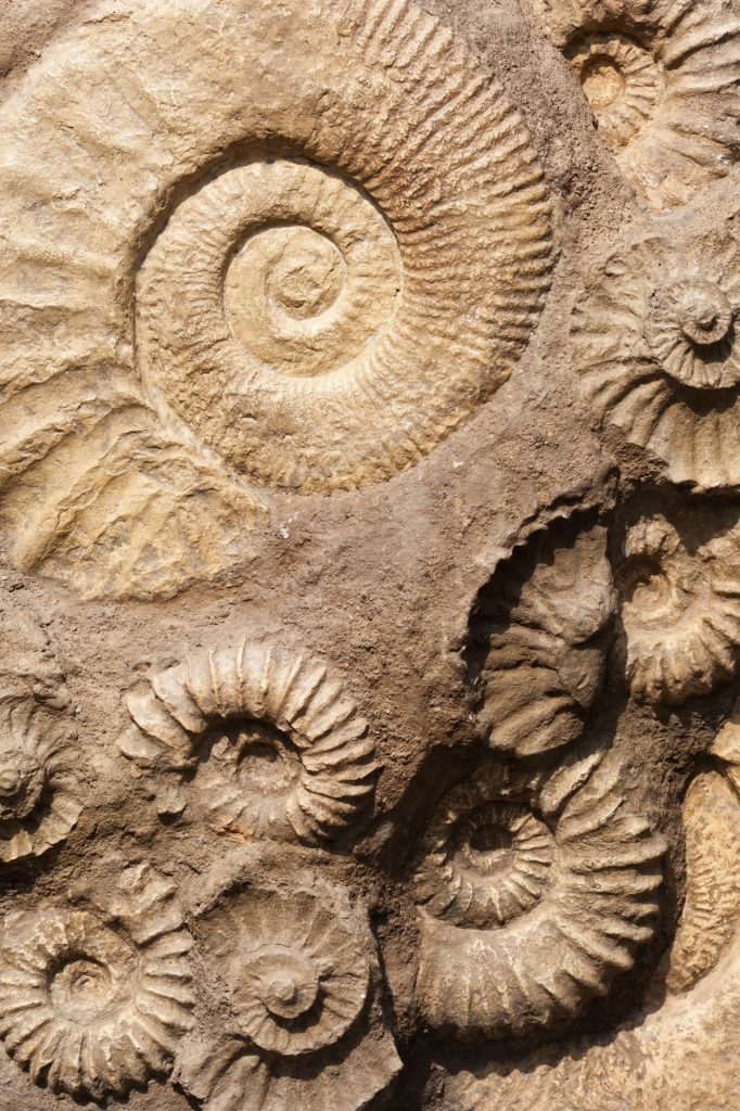 Great Fossil Hunters